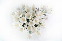 Flores brancas da mola macia Fotografia de Stock Royalty Free