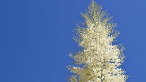 Flores brancas de encontro ao fundo do céu azul Foto de Stock
