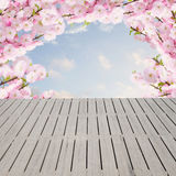 Flores brancas de florescência da árvore Fotos de Stock Royalty Free