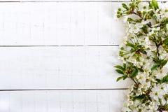 Flores brancas de uma cereja em ramos em um fundo de madeira branco Foto de Stock