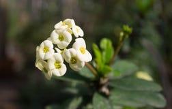 Flores brancas de uma planta desconhecida sob os raios de um sol fotos de stock