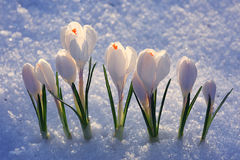Flores brancas delicadas Imagem de Stock