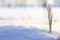 Flores brancas delicadas Fotografia de Stock Royalty Free
