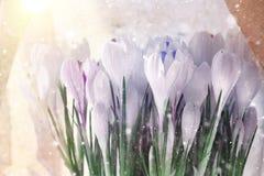 Flores brancas delicadas Imagens de Stock Royalty Free