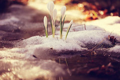 Flores brancas delicadas Imagens de Stock