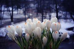 Flores brancas delicadas Fotos de Stock Royalty Free