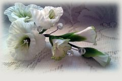 Flores brancas delicadas Fotos de Stock