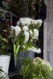Flores brancas do Hyacinth Imagens de Stock Royalty Free