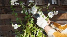 Flores brancas do jardim Imagem de Stock