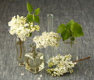 Flores brancas do Lilac fotos de stock