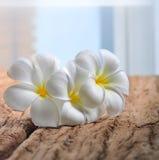 Flores brancas do plumeria na madeira Fotos de Stock Royalty Free