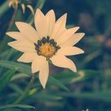 Flores brancas do vintage imagem de stock