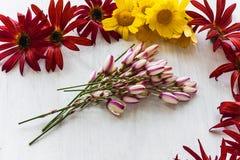 Flores brancas e amarelas vermelhas Foto de Stock