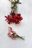 Flores brancas e amarelas vermelhas Fotografia de Stock