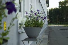 Flores brancas e azuis Foto de Stock
