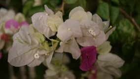 Flores brancas e cor-de-rosa bonitas imagem de stock royalty free