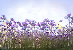 Flores brancas e cor-de-rosa pequenas no fundo delicado do ar de luz suave fora Foto de Stock Royalty Free