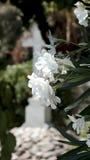 Flores brancas e cruz Fotos de Stock Royalty Free