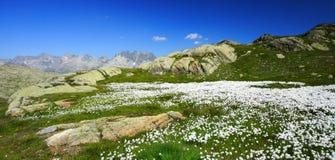 Flores brancas e montanhas fotos de stock