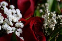 Flores brancas e rosas vermelhas Uma combinação de beleza e de naturalidade sutil Fotografia de Stock Royalty Free
