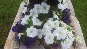 Flores brancas e roxas Imagens de Stock Royalty Free