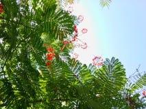 Flores brancas e vermelhas fotos de stock royalty free