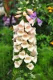 Flores brancas em Hong Kong Flower Exhibition fotografia de stock