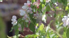 Flores brancas em uma árvore decorativa video estoque