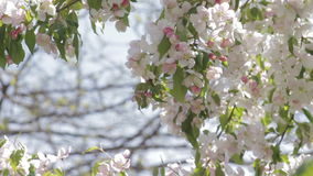 Flores brancas em uma árvore decorativa filme