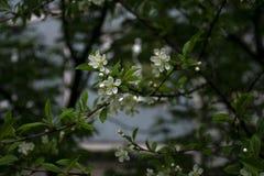 Flores brancas em uma filial Fotos de Stock