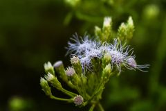 flores brancas na grama verde na floresta Foto de Stock Royalty Free
