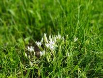 Flores brancas no campo em um dia ensolarado foto de stock