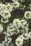 Flores brancas no estilo do filme Fotografia de Stock