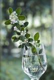 Flores brancas no fundo bonito imagem de stock royalty free
