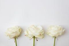 Flores brancas no fundo branco Fotos de Stock Royalty Free
