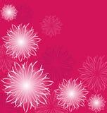 Flores brancas no fundo cor-de-rosa Imagem de Stock Royalty Free