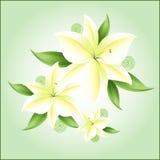 Flores brancas no fundo delicadamente verde ilustração do vetor