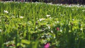 Flores brancas no fundo verde filme