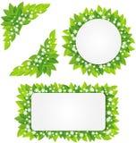 Flores brancas no quadro verde das folhas Imagem de Stock Royalty Free