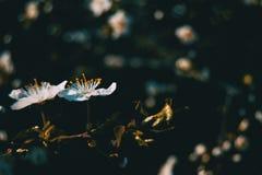 Flores brancas no ramo foto de stock royalty free