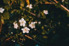 Flores brancas no ramo fotos de stock royalty free