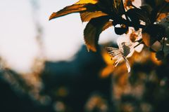 Flores brancas no ramo foto de stock