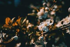 Flores brancas no ramo imagem de stock