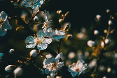 Flores brancas no ramo fotos de stock
