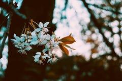 Flores brancas no ramo imagem de stock royalty free