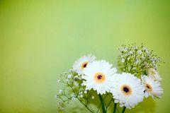 Flores brancas no vaso Imagens de Stock