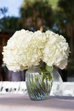 Flores brancas no vaso de vidro Foto de Stock Royalty Free