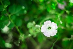 Flores brancas no verde foto de stock