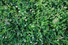 Flores brancas pequenas Imagens de Stock