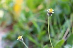 Flores brancas pequenas Foto de Stock Royalty Free